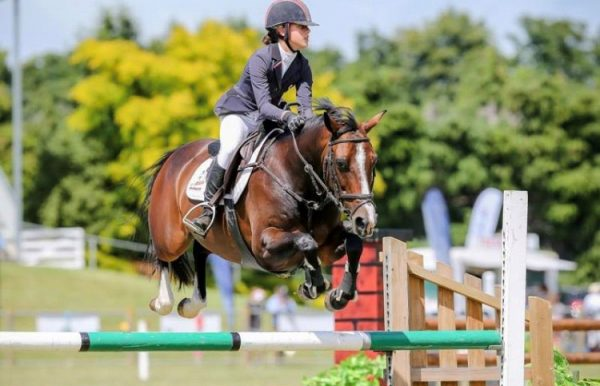 Which Supplement do you Choose for your Horse?