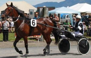 Energy and the Topline in the Standardbred Horse
